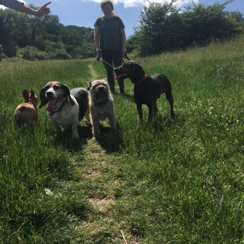 Find the best dog walkers in chessington bark solutioingenieria Choice Image