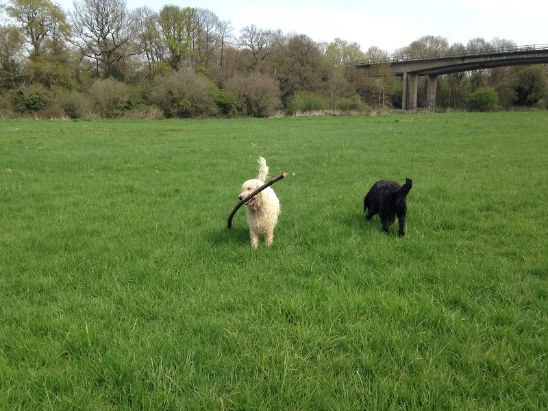 Find the best dog walkers in reigate bark solutioingenieria Choice Image