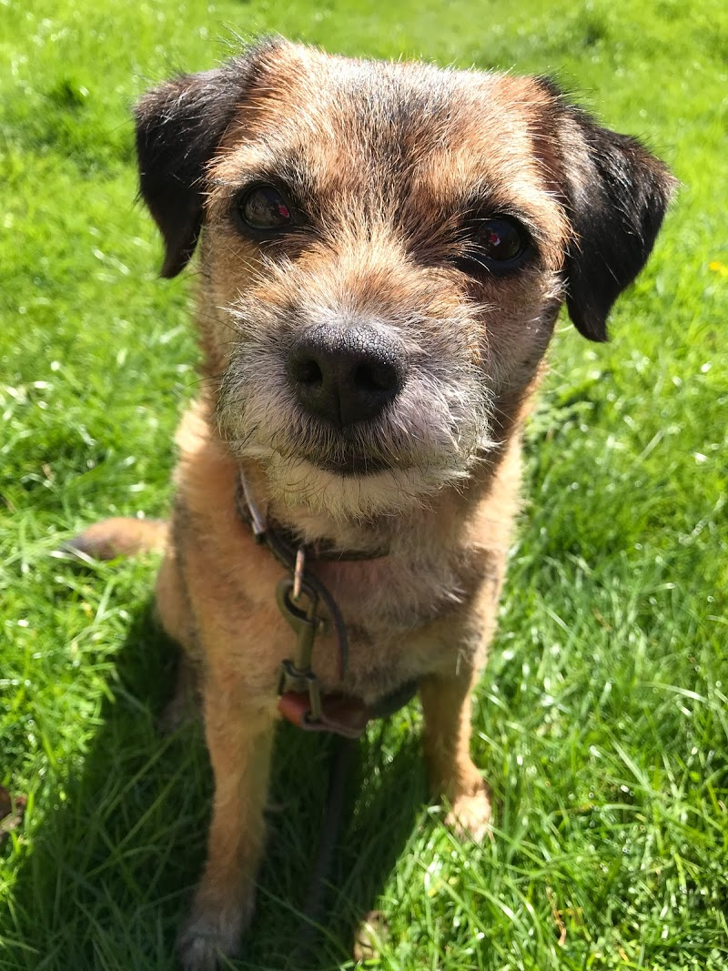 Pet Sitters Newmarket | Bark Profile