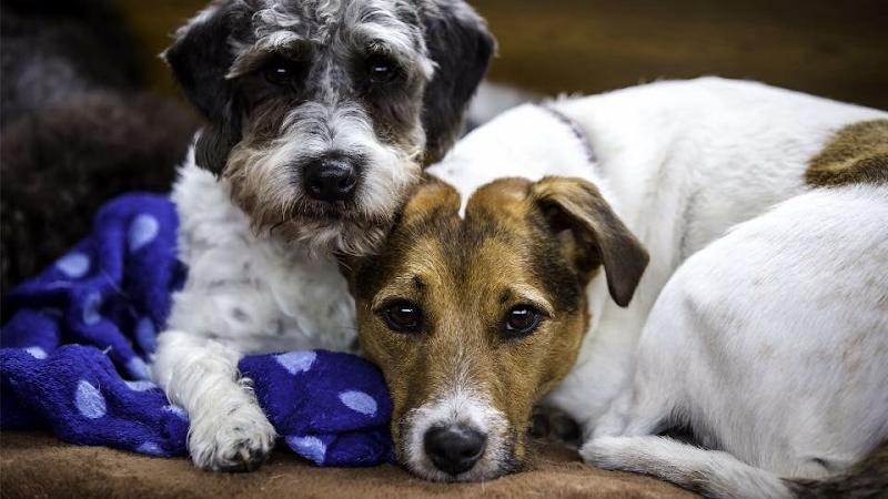 Find the best dog trainers in haywards heath bark solutioingenieria Choice Image