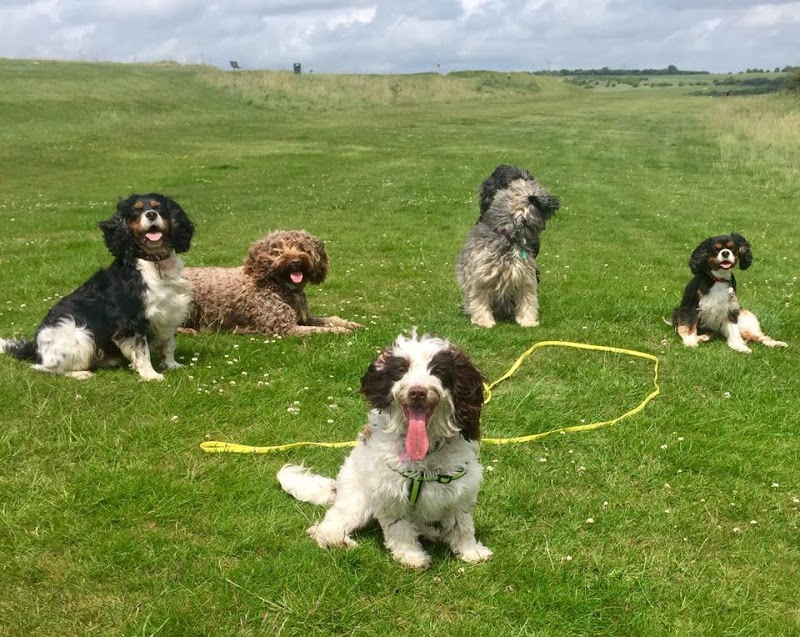 Find the best dog walkers in eastbourne bark solutioingenieria Choice Image