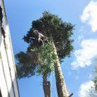 Sp tree care