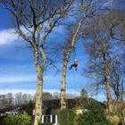 Crowcroft bros tree surgeons