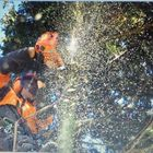 Willow tree services and landscapes