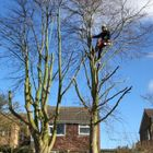 T gray tree and Garden services