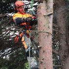 Clarkes trees services