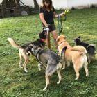 Debbie's 4 Dogs