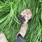Mr k9 dog training