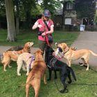 Hound Town Dog Behaviour & Training