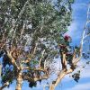 Jb tree and gardening services profile image