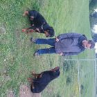 Personal Protection Dogs.Info