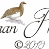 Ptarmigan Photography profile image