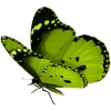 Free as a Butterfly profile image