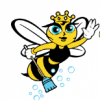 Busy Bee Cleaning Services profile image