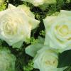 Florology profile image