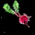 Vita Nutrition Services logo