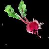 Vita Nutrition Services profile image