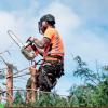 Pro-Cut Tree Service profile image