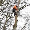 Billy 5Star treecare profile image