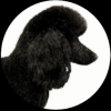 Best In Show Grooming profile image