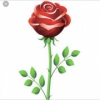 Rose Cleaning and Ironing profile image