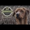 Merrington Gundog Training School profile image