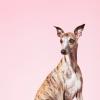 The Fareham Canine Company profile image