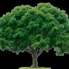 Southwick Forestry Ltd profile image