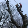 Wyre forest tree surgery profile image