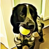 Maximilian's Dog Walking Service profile image