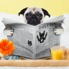 Pet & People Services profile image