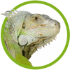 SeoSamba profile image