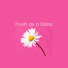 Fresh as a Daisy Home Services profile image