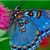Transforming Life Coaching profile image