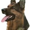 K9 Security Support Services Ltd profile image