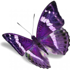 Annie Cook Couseling/Hypnotherapy Services logo