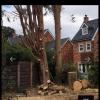 TREE&GARDEN profile image