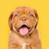 SmartDogTraining.co | Veterinary Approved profile image