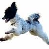 Ipswich Wagtail Walks and Training profile image