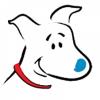 Doves Dog Academy & Kennel profile image