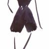 Kookie Muhretti profile image