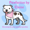 Pawfection by Elaine profile image