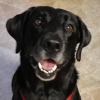In the lead dog training profile image
