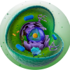 A-Level Biology Tuition profile image
