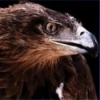 Raven Cleaning Company profile image