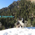 TK Dogworks profile image.