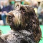 Broomhill kennels & cattery  profile image.