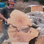 Sequoia tree care profile image.