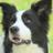Blackgold pet services profile image