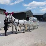 White Horse Farm profile image.